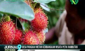 Desa Pangkah Wetan Kembangkan Wisata Petik Rambutan